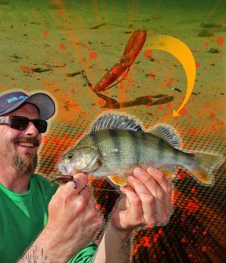Barsch angeln mit dem Jika Rig