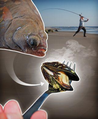 Muscheln als Köder zum Brandungsangeln