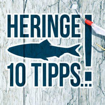 10 tipps zum heringe angeln
