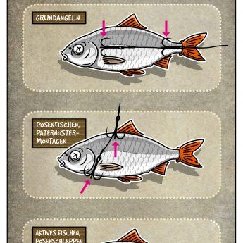 Köderfischmontagen zum Hechtangeln