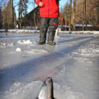 Tipps zum Eisangeln am Forellensee