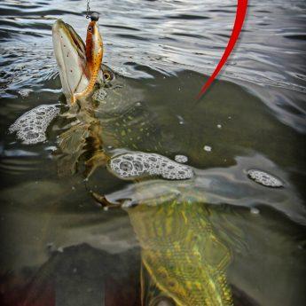 Hecht angeln in Dänemark auf Mön