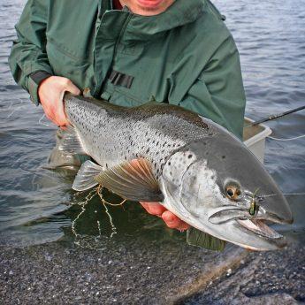 Tipps zum Fliegenfischen auf Meerforelle