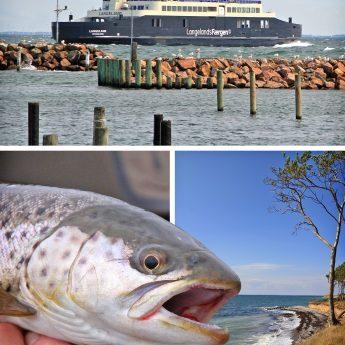Meerforellen in Dänemark auf Langeland