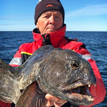 Steinbeißer angeln in Norwegen