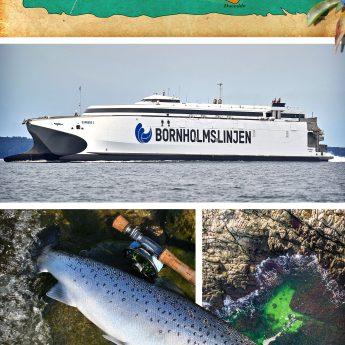 Angeln auf Bornholm